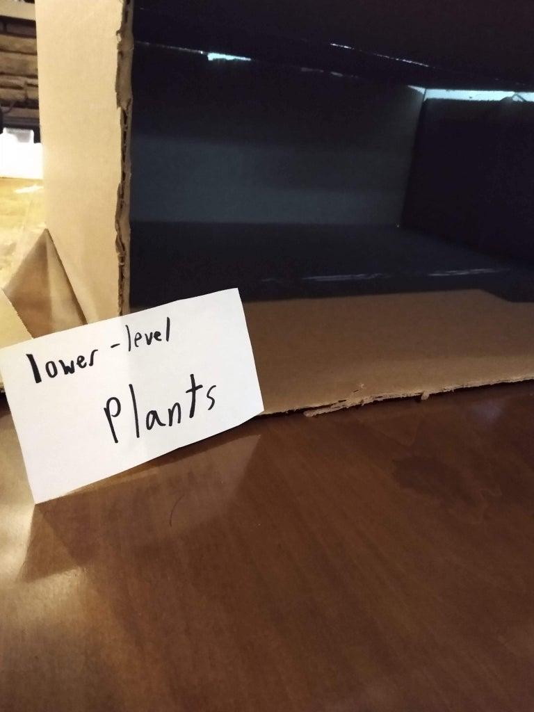 Lower-Level Plants