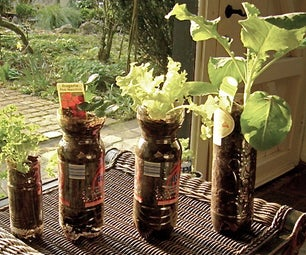 Plants Growing in Types of Bottles