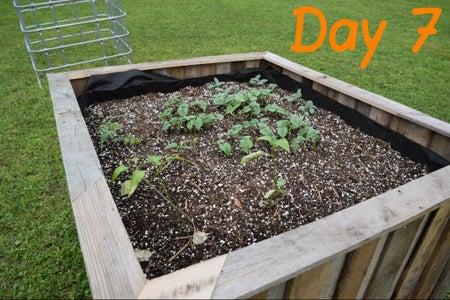Plant Your Garden