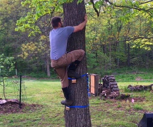 Tree Steps – a Tree Friendly Climbing Device for the Risk Tolerant