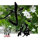 Home grown bonsai - Wrightia Religiosa Multi-layered Flower Cultivar