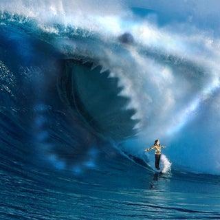 surfing-sharks.jpg