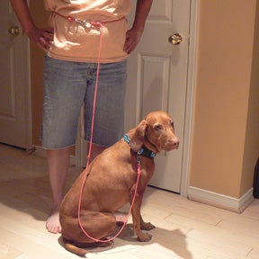 How to Make a Hands Free Dog Leash in 15 Minutes