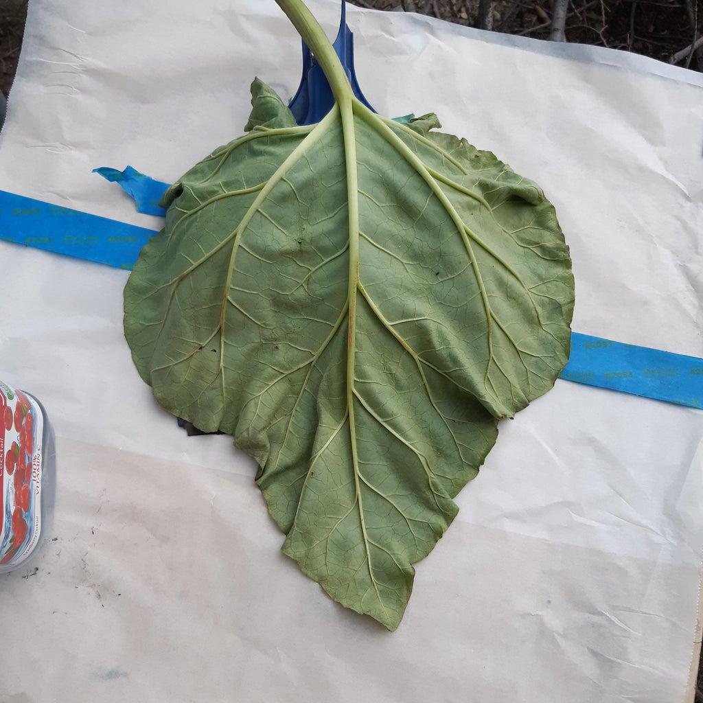 Preparing the Leaf