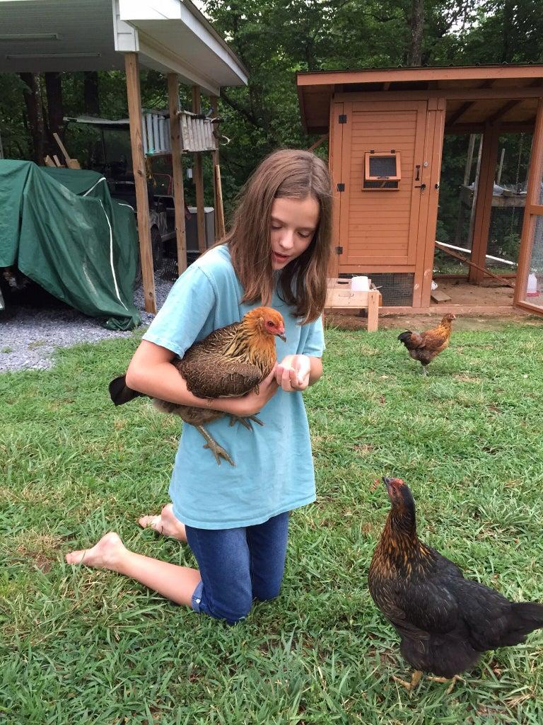 Happy Chicks Lay Yummy Eggs!