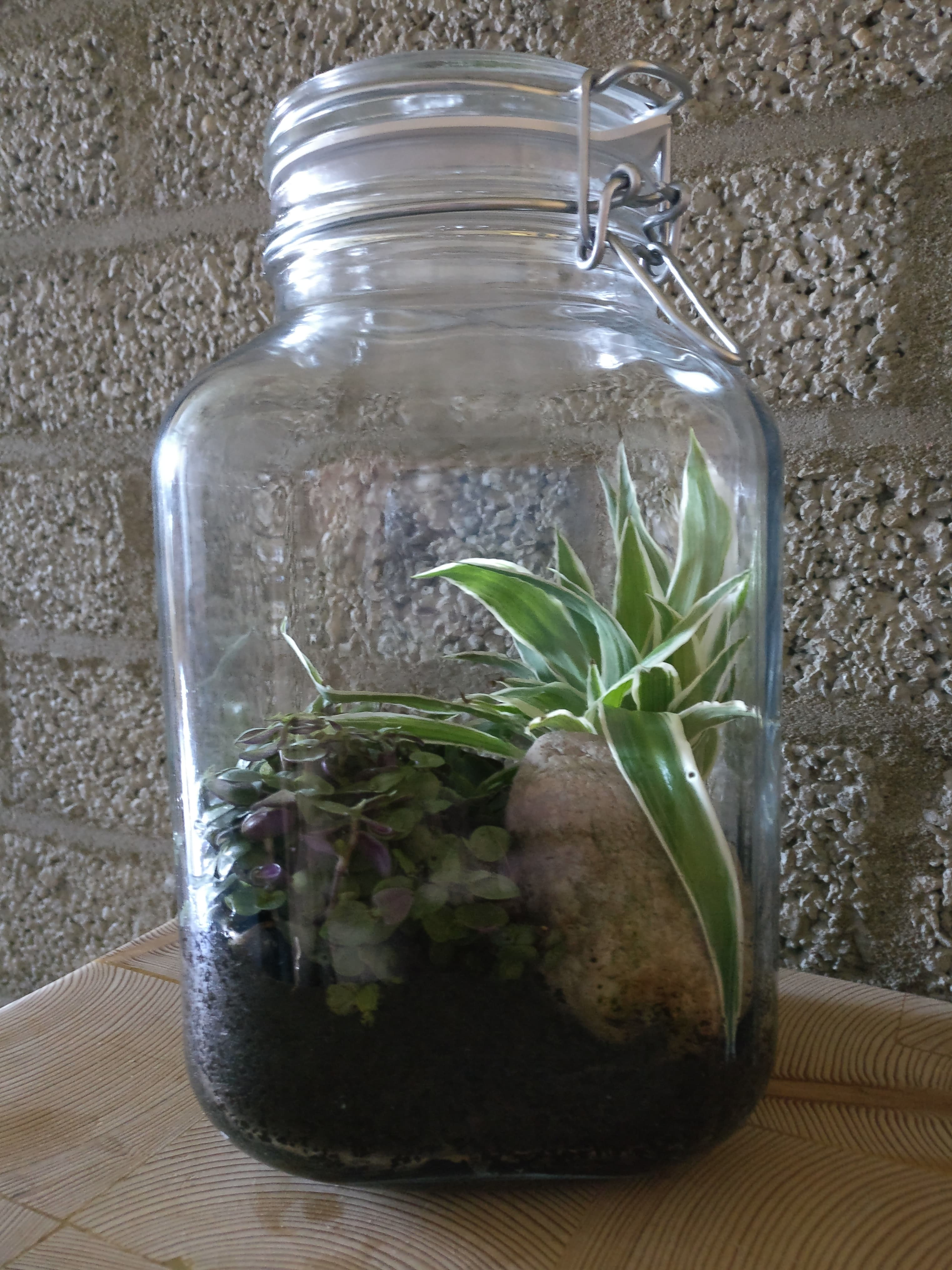 Do It Your Self Sustaining Ecosystem 6 Steps With Pictures Instructables