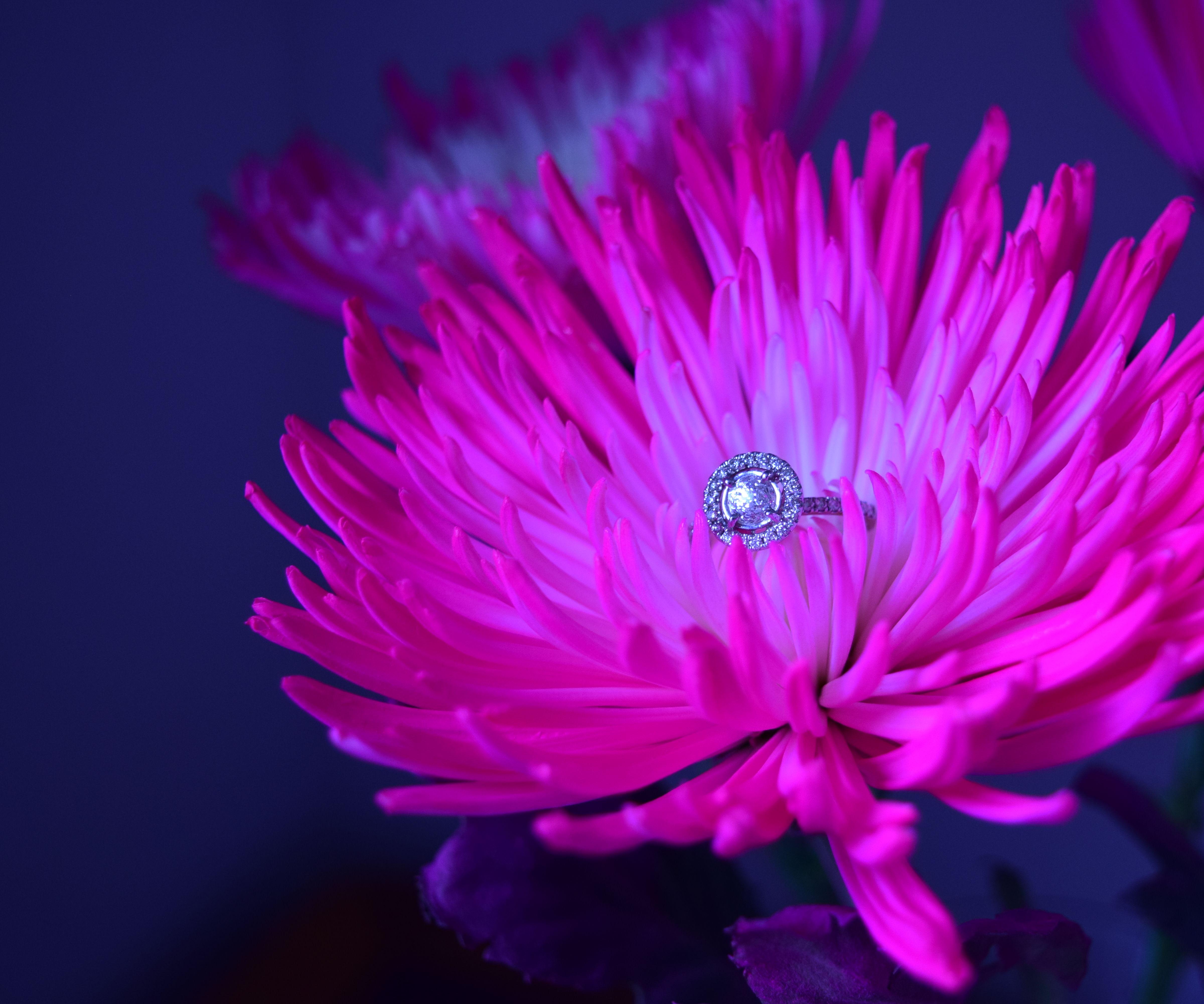 Macro Light Ring - Beauty Bloggers Best Friend