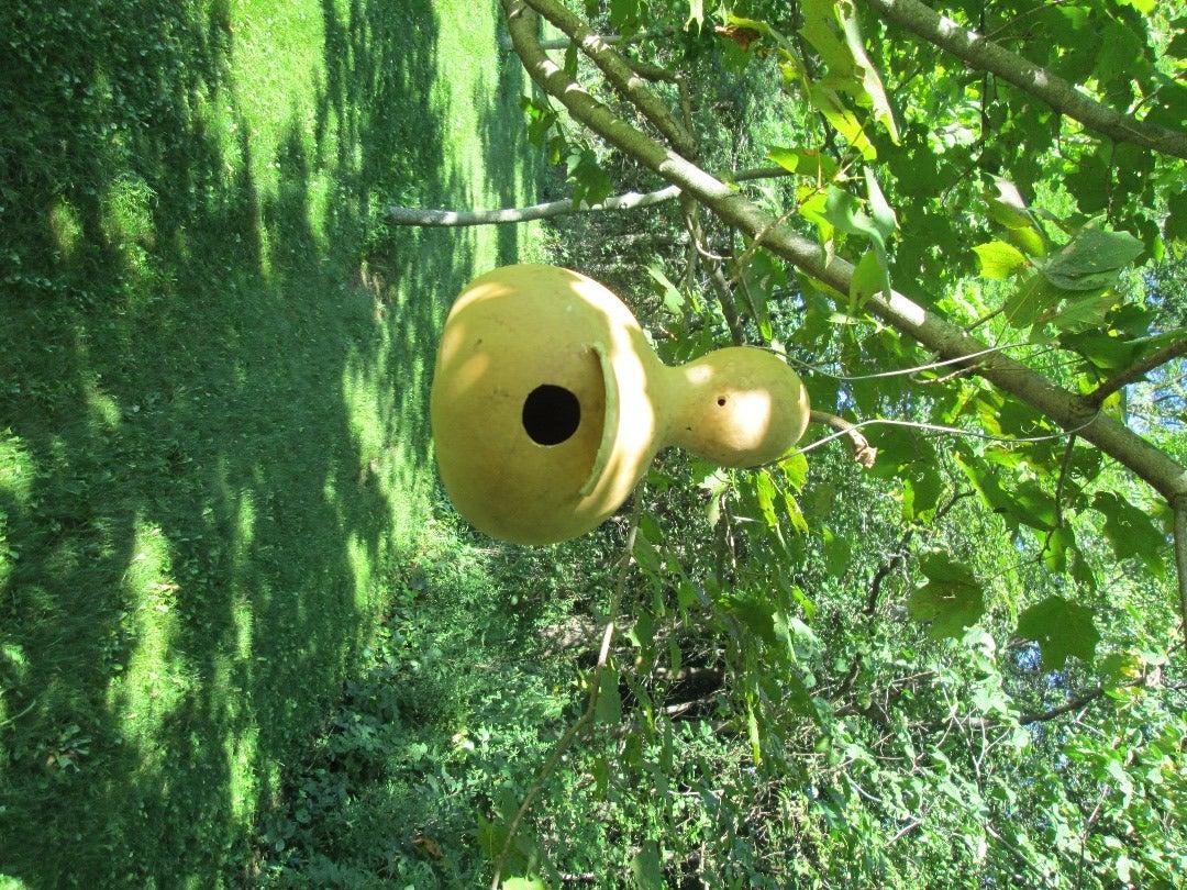 Build a Gourd Birdhouse