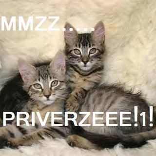 two-tabby-cats.jpg