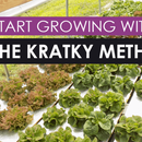 Making a Cheap Hydroponic System, the Kratky Way