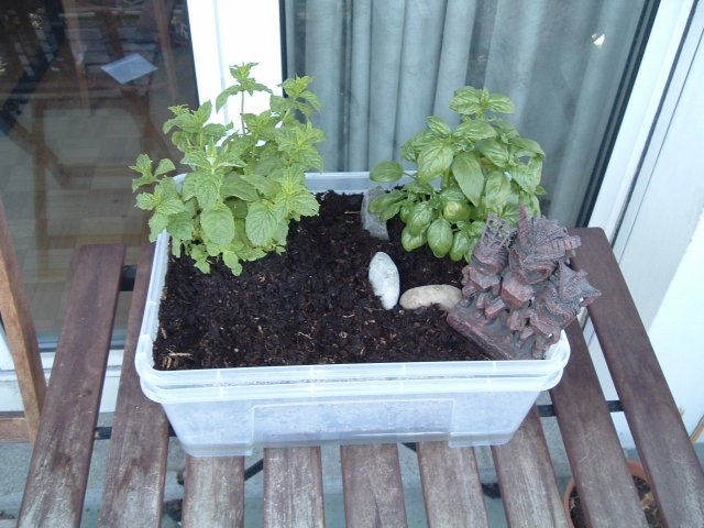 Self Watering Mini Garden