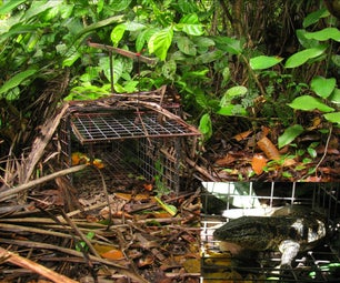 Cage Trap for the Most Extreme!