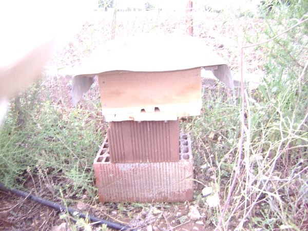 An Emergency Bee Hive