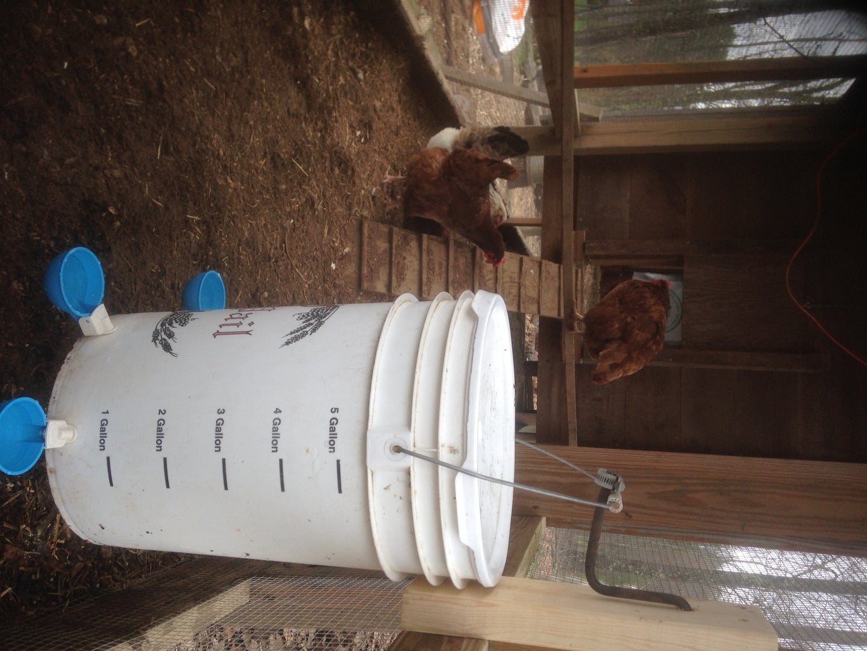 Super Simple Chicken Waterer - Step #3 - Mount the Bucket!
