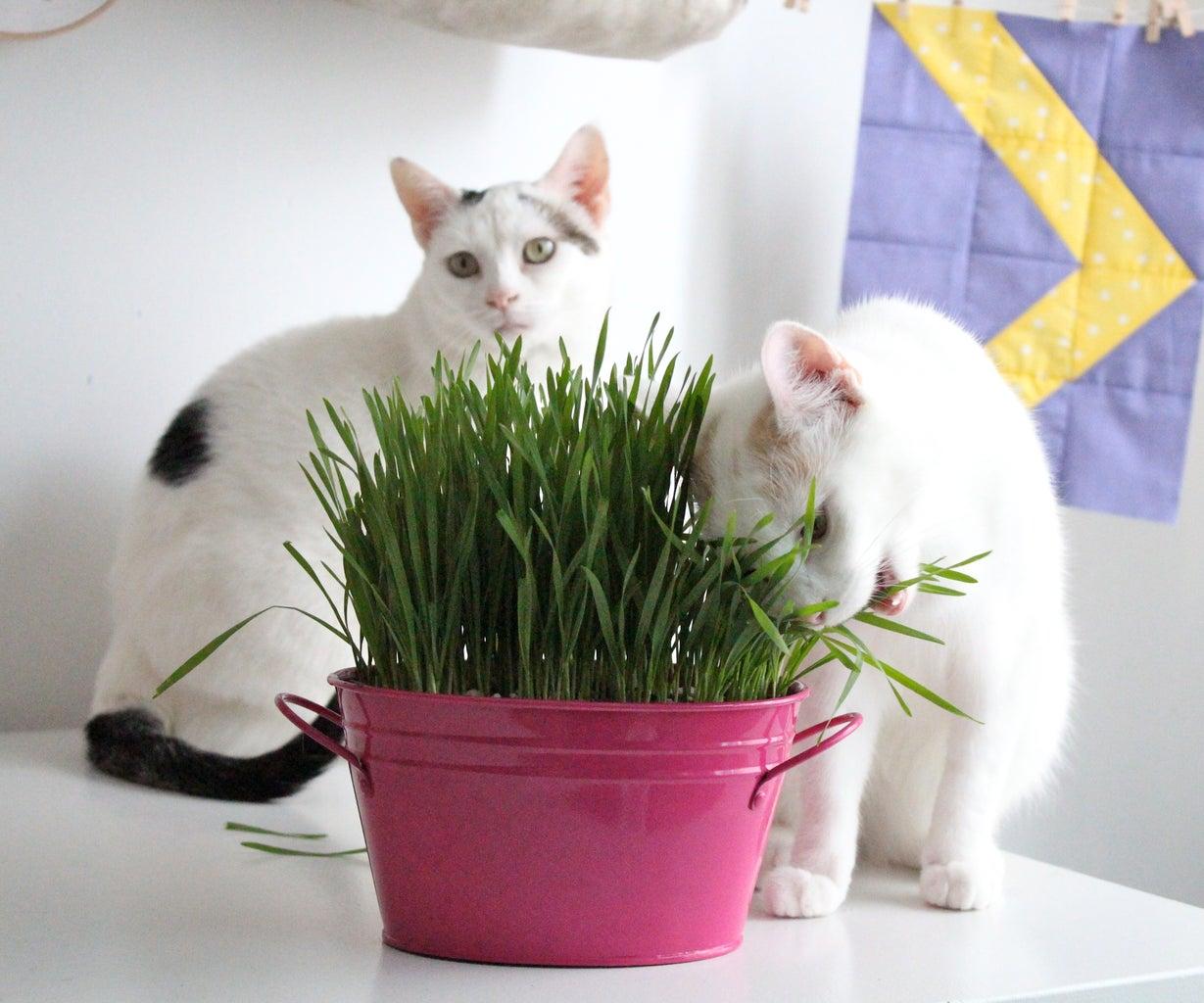 Bonus Cat Photos