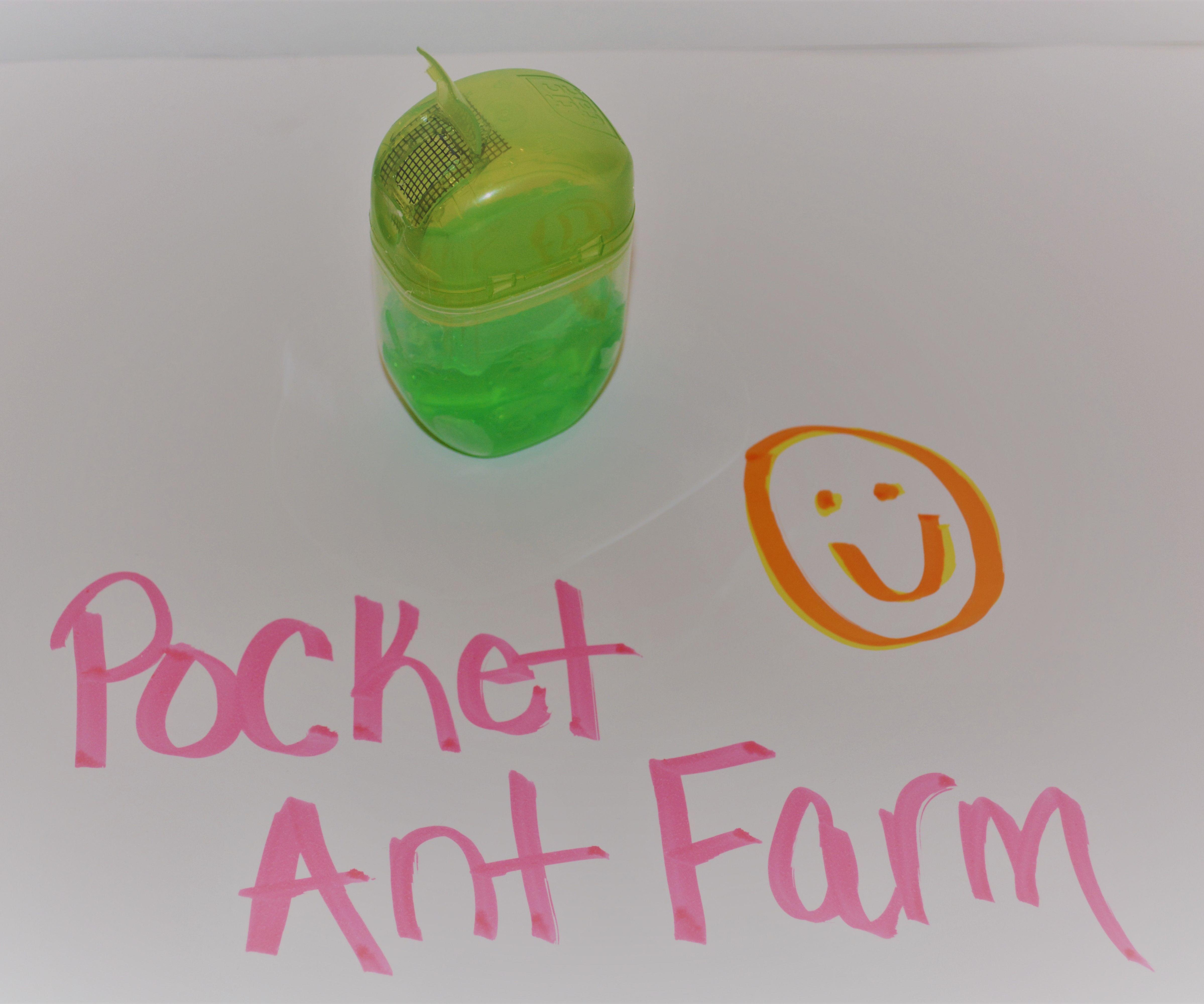 Pocket Size Ant Farm