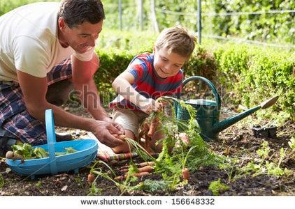 Choosing Your Type of Garden