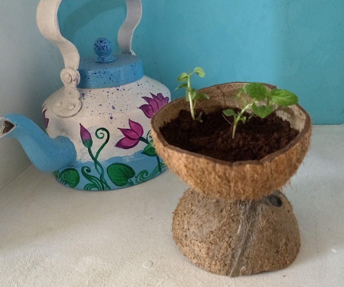 Planter Made From Used Coconut