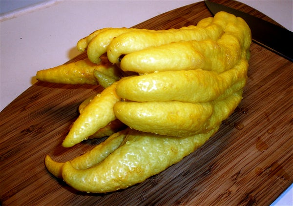 Candied Buddha's Hand Citron