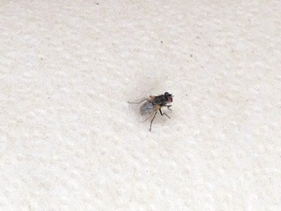 Kill a Fly with Rubber Bands