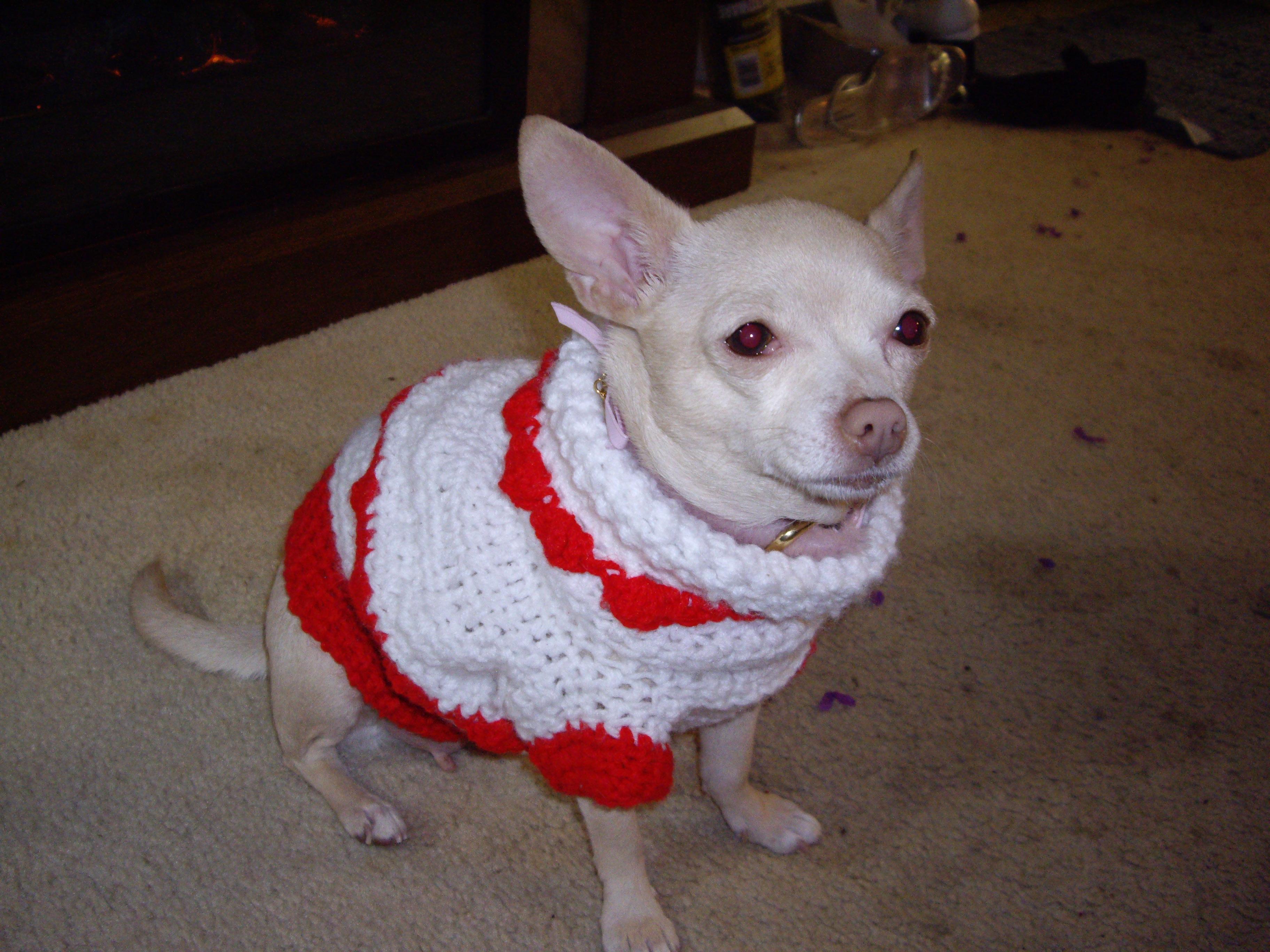 A Warm Puppy Sweater