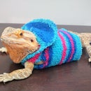 No-Sew Bearded Dragon Jacket