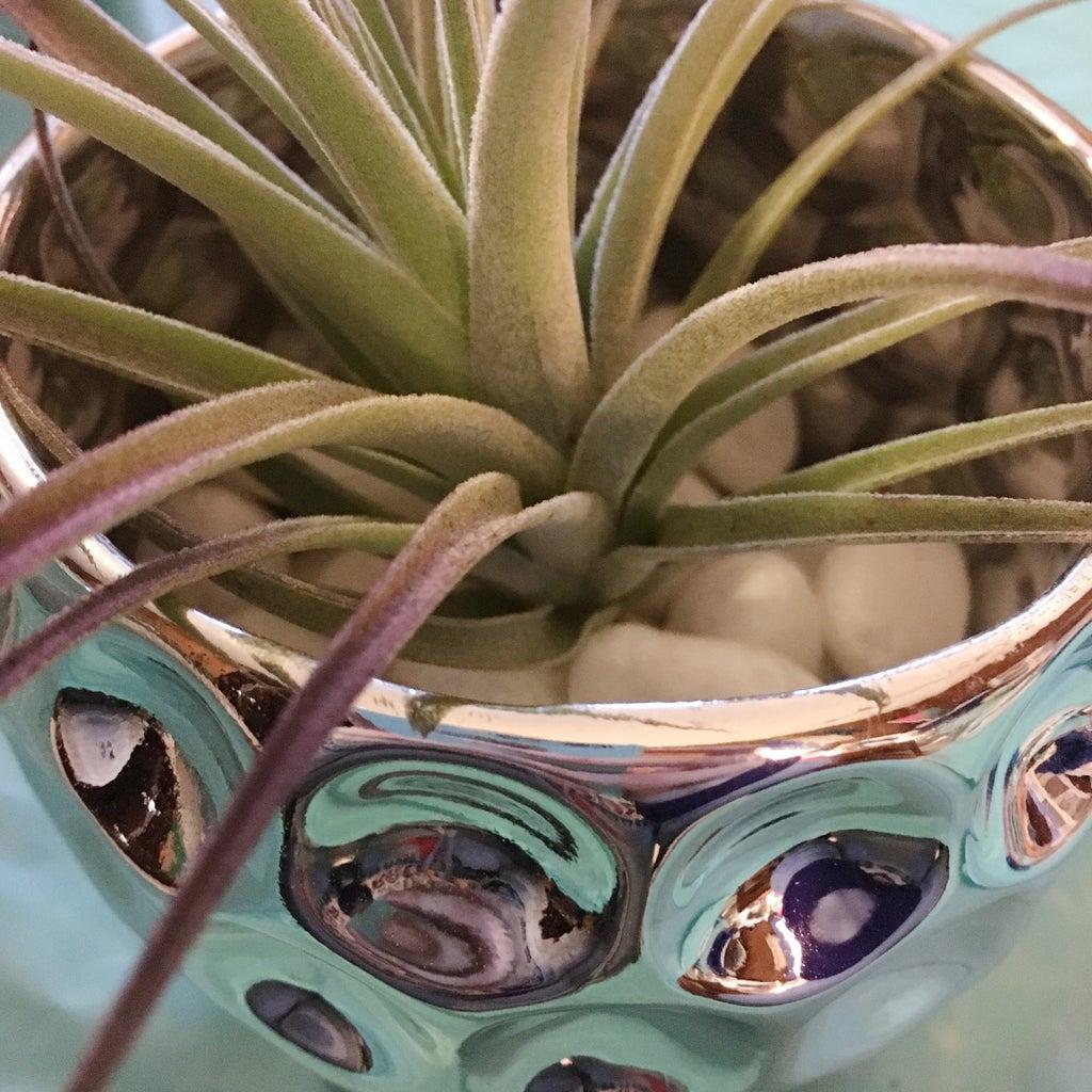 Assembling Pineapple Planter