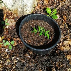 Deep Bucket: Planting