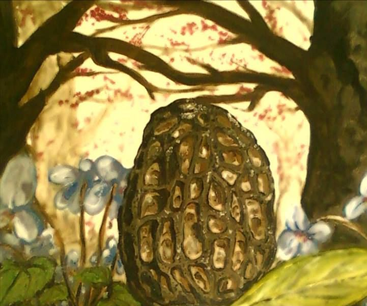 The newbies guide to Morel Mushrooms