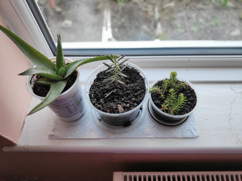 Add Plant!