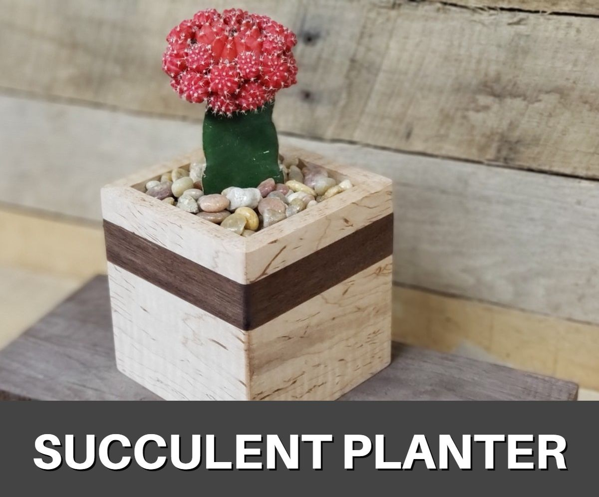 How to Make a Succulent Planter