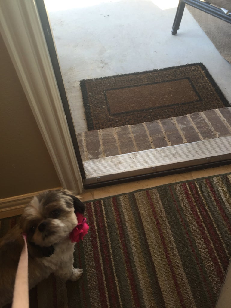 Immediately Put on the Leash and Open the Door to Take the Dog Outside