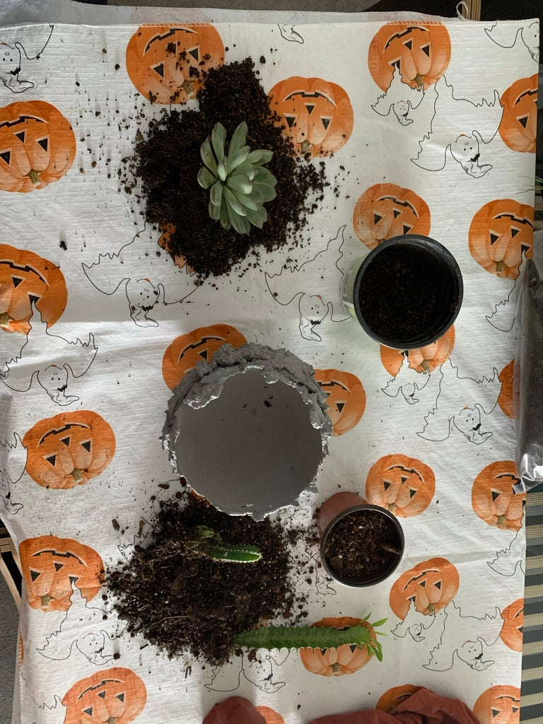 Remove Plants From Their Pot and the Dirt From Their Roots