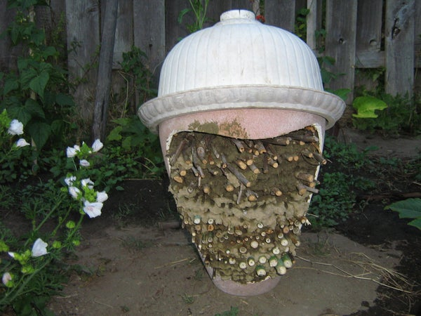 Save the Bees From Extinction! You CAN Do It.