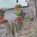 Make Tree Stumps Look Good