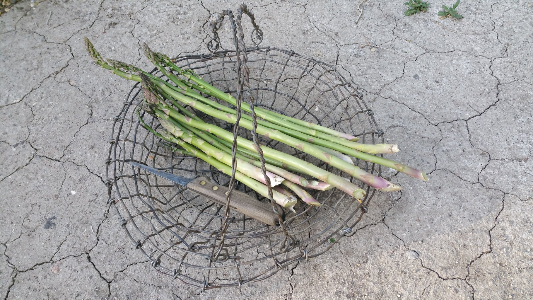 Ways to Use the Harvest Basket