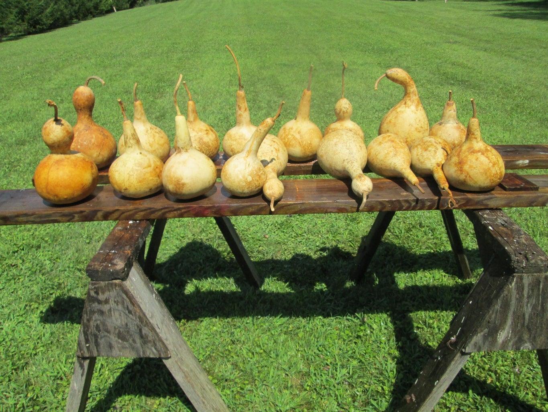 Clean the Gourds