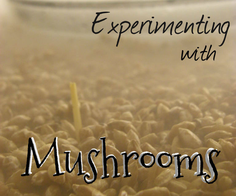 Experimenting With Mushrooms!