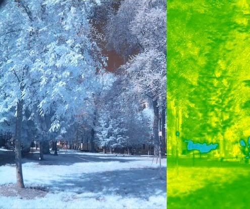 DIY Infrared Plant Analysis