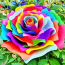 Handmade Rainbow Rose