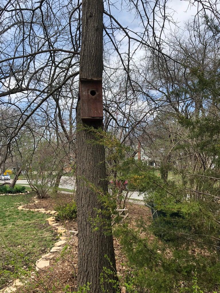 Happy Tree, Happy Birds