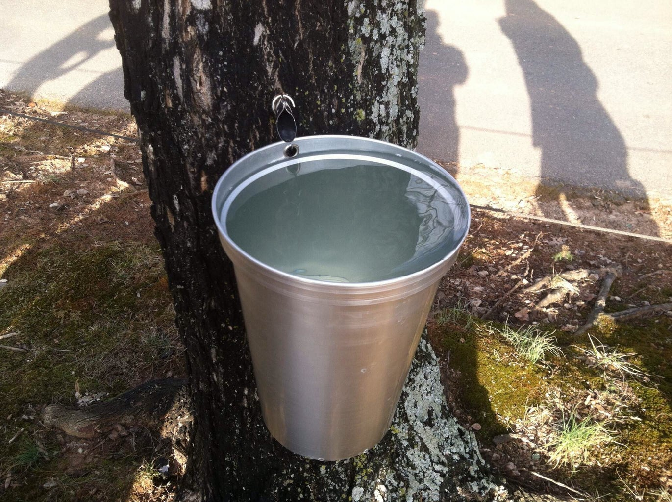 Making Maple Syrup at School: a Project for Teachers