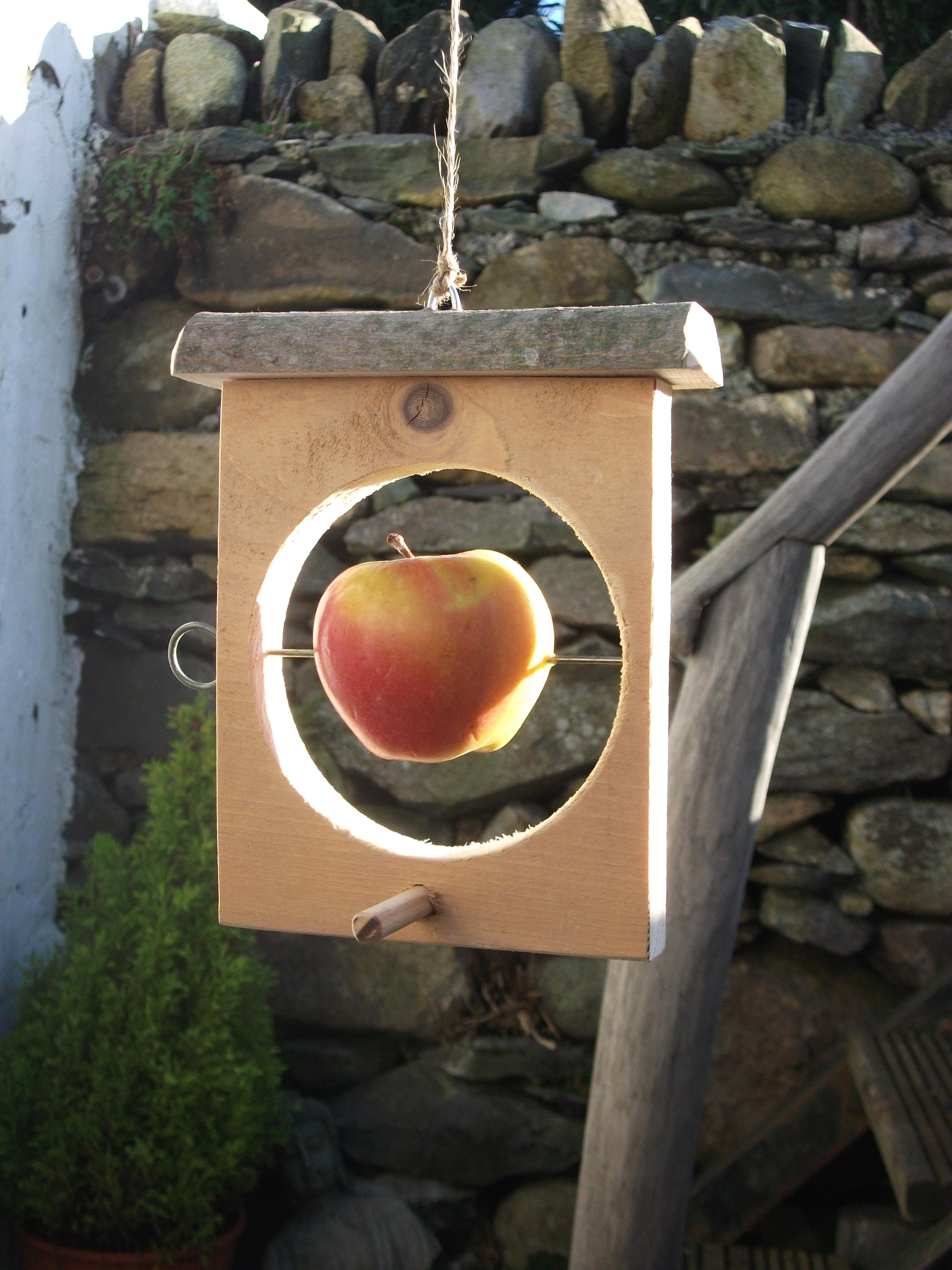 Make an easy bird feeder.