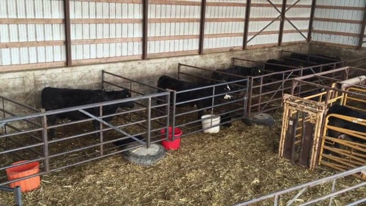 How to Set Up a Calving Barn and Run a Calving Operation