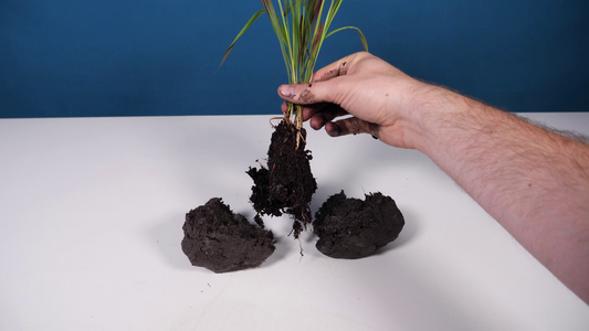 Incorporate the Plant Into the Soil Ball