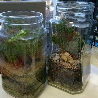 How to Make a Cactus Terrarium - Easy and Cheap Way