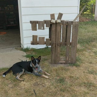 Pallet Dogs