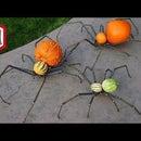 Spider Pumpkins - Arachnophobia Jack O' Lanterns
