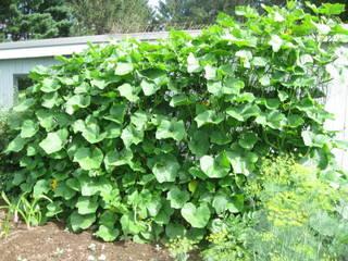 Grow Squash Vertically