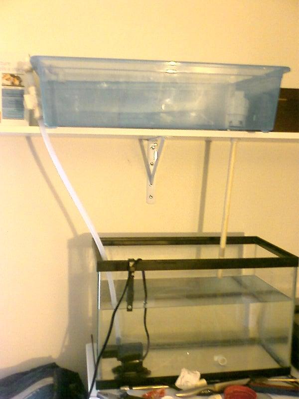Aquaponics (Growing Plants With Fish Poo)